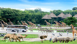 Bangkok Safari World Tour Package from Bangladesh